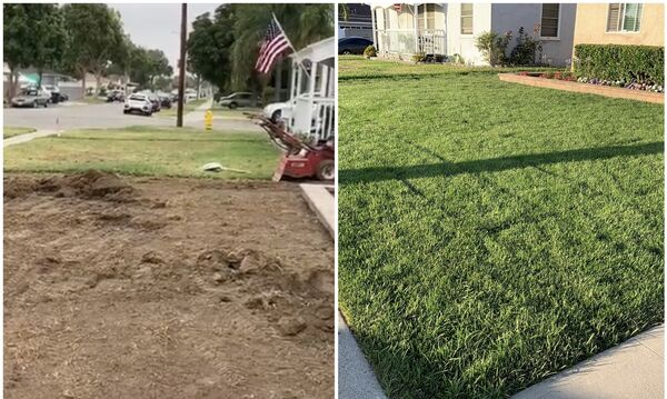 Before & After Sod Installation in Costa Mesa, CA (1)
